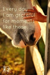 horse-quotes-horses-pinterest-WXGhet-quote
